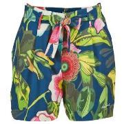 Shorts & Bermudas Desigual  INIDE